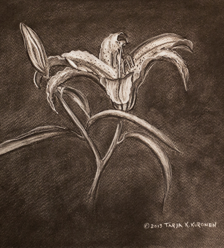 DayLily Illustration